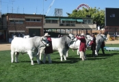 Senior Bull Line Up