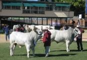 Bulls - 20 - 30 months Class