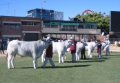 Heifers 20 - 30 month Class