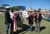 Grand Champion Bull - Italia James Bond